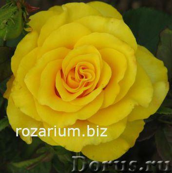 Розы почтой полина козлова